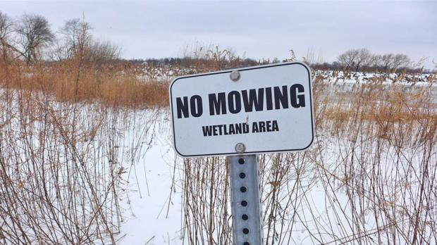 Wetlands on the northern end of the island -Photos by Nancy J. Parisi