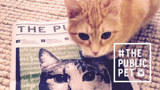 """Kiki reading the @publicbflo #thepublicpet""–@maggie_murr"