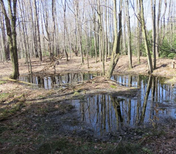 Vernal Pool in WNY on March 26, 2016 Photo by Jburney